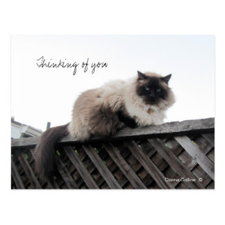 Thinking of You cat on a fence Postcard