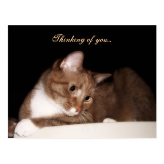Thinking of You (Cat) Postcard