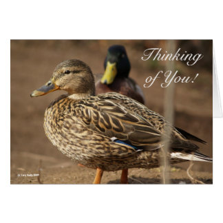 Thinking of You Ducks Card