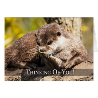 Thinking Of You Otter Greeting Card