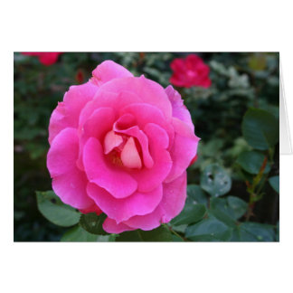 Thinking of You Pink Rose Card