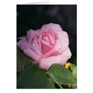 Thinking of You - Pink Rose Greeting Card