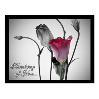 Thinking of You - Pink Rose Postcard
