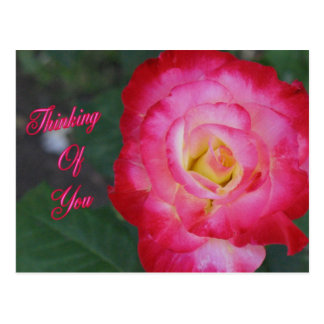Thinking Of You Pink Rose Postcard