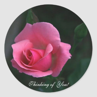 Thinking of You ! Pink Rose,  Round Sticker