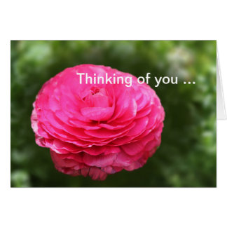 Thinking of you Pink Zinnia Greeting Card