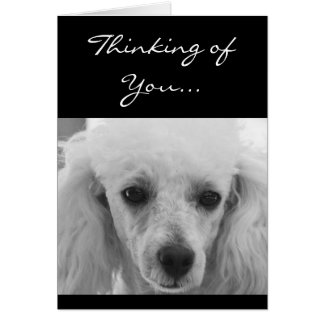 Thinking of You Poodle dog greeting card