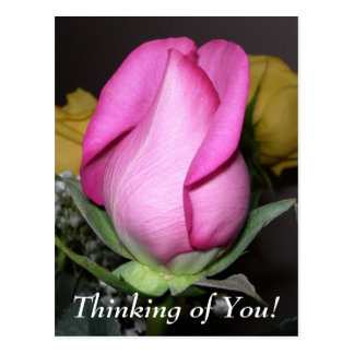 Thinking of You! Postcard
