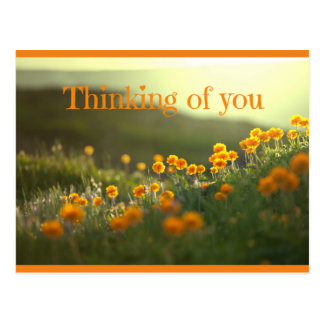 Thinking Of You Postcard Greeting Card
