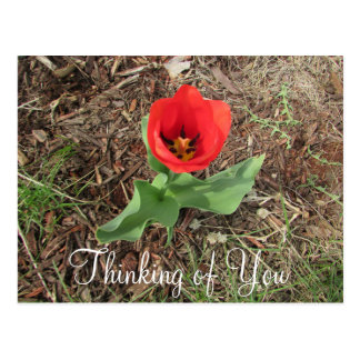 Thinking of You Pretty Red Flower Postcard