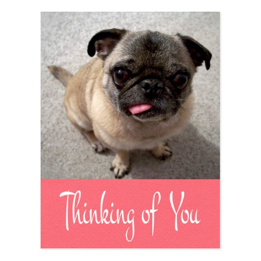 Thinking of You Pug Puppy Dog Pink Post Card