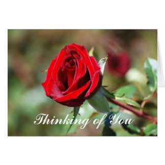 Thinking of You Red Rose Blank Card