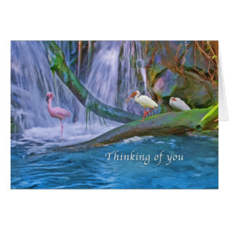 Thinking of You, Tropical Waterfall, Birds Card