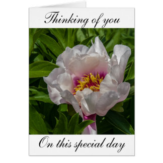 Thinking of you, white peony flower card