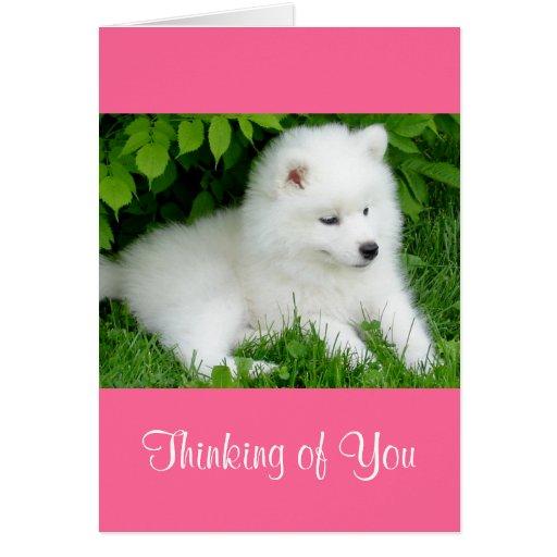 Thinking of You White Samoyed  Puppy Dog Pink Card