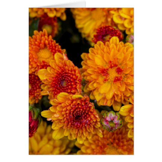 Thinking of you yellow with orange mum card