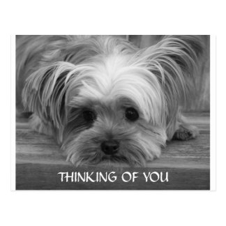 Thinking of You Yorkshire Terrier  Puppy  Postcard