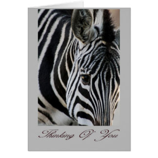 Thinking of you - Zebra - Animal Greeting Card