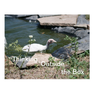 Thinking Outside the Box Postcard
