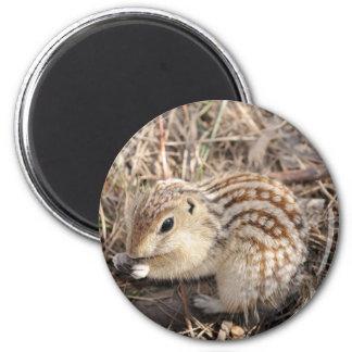 Thirteen Lined Ground squirrel Magnet