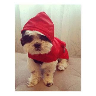 This dog hates rain postcard