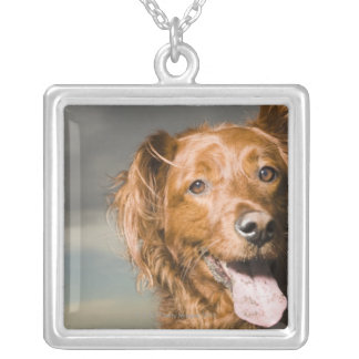 This dog is part golden retriever. silver plated necklace