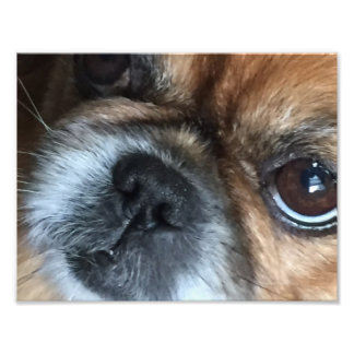 THIS DOG'S GOT A LOT TO SAY PHOTO PRINT