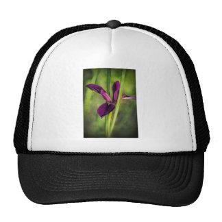 This is a Louisiana Gamecock Wildflower - Iris hex Cap