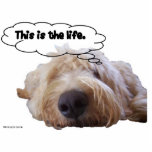This is the life Goldendoodle dreaming Photo Cut Out