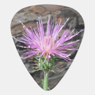 Thistle Bloom in Front of Fallen Tree Guitar Pick