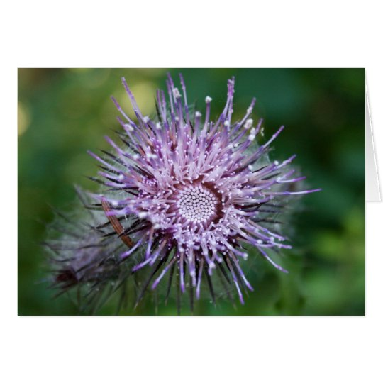 Thistle Card