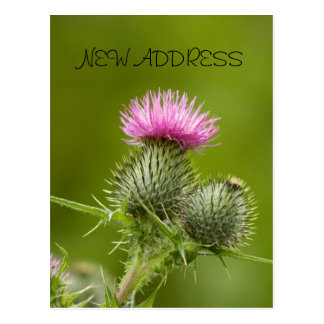 Thistle Flower New Address Card Postcard