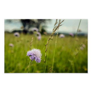 Thistle & Grass, wildflowers in Polish fields Poster
