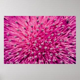 Thistle head, macro  flowers poster