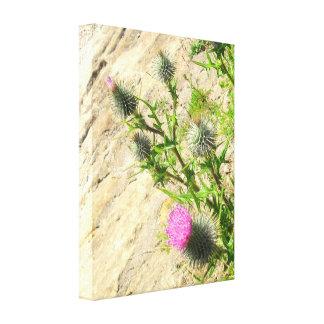 Thistle on Rock Canvas Print