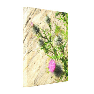 Thistle on the Rock Canvas Print