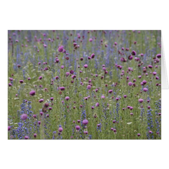 Thistle & Purple Strife Wild Flowers Card