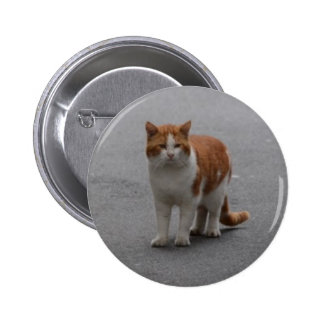 Thomas Ginger And White Cat Button