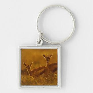 Thompson's Gazelle (Gazella Thomsonii) Mother Silver-Colored Square Key Ring
