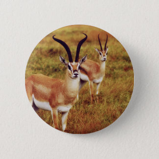 Thompsons Gazelle safari buttons  & badges