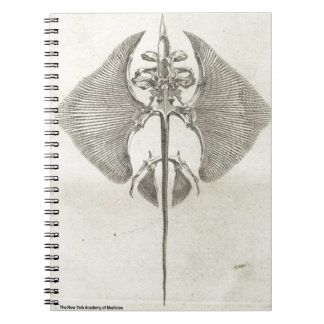 Thornback Skeleton Spiral Notebook