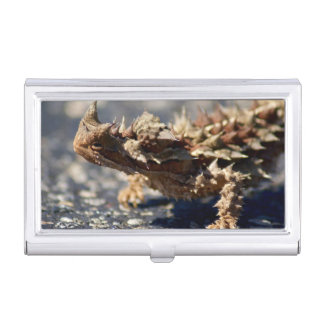 Thorny Devil Lizard, Outback Australia, Photo Case For Business Cards