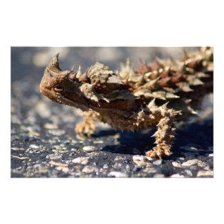 Thorny Devil Lizard, Outback Australia, Photo Stationery