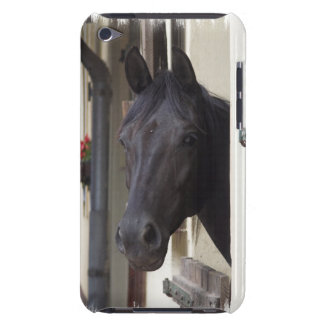 Thoroughbred Friesian Cross iTouch Case