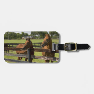 Thoroughbred horse farm in Marion County, Luggage Tag