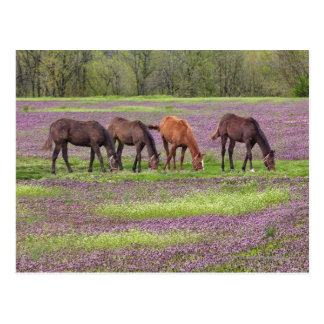Thoroughbred horses in field of henbit flowers postcard