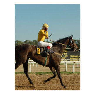 Thoroughbred Race Horse Postcard