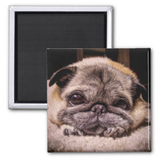 Those Pug Eyes (Digital Painting) Magnet