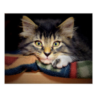 Thoughtful Tabby Kitten Poster