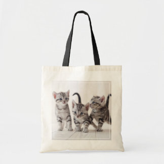 Three American Shorthair Playing Tote Bag